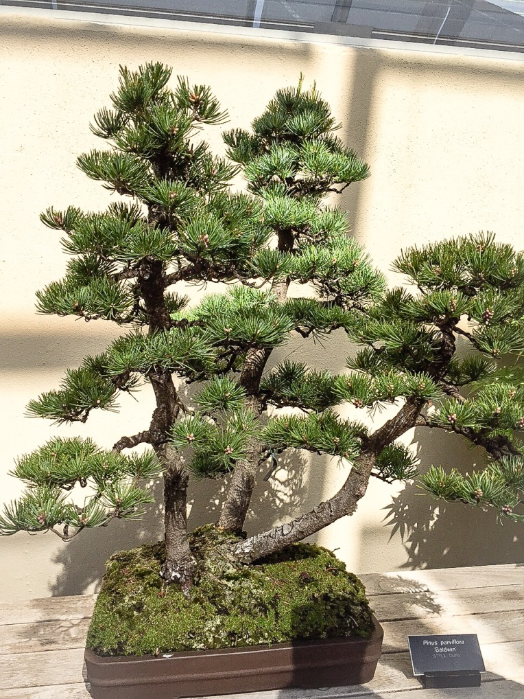 this one was my favorite in the bonsai museum