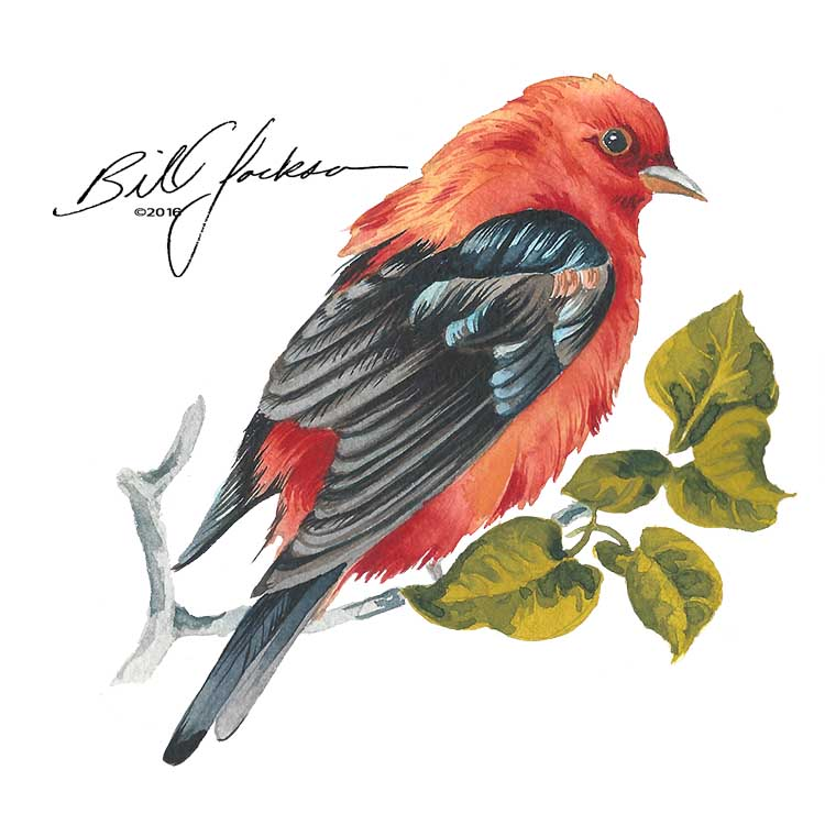 scarlet tanager painting©2016