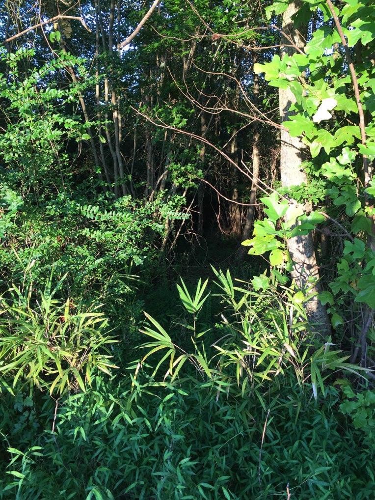 swamp edge